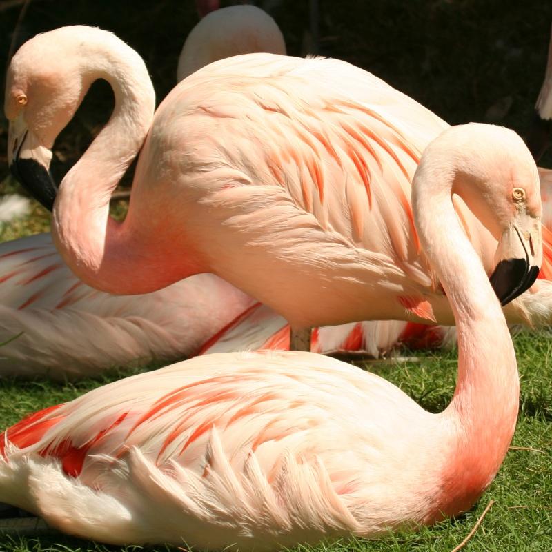 Fenicotteri al Parco Zoo di Lignano Riviera
